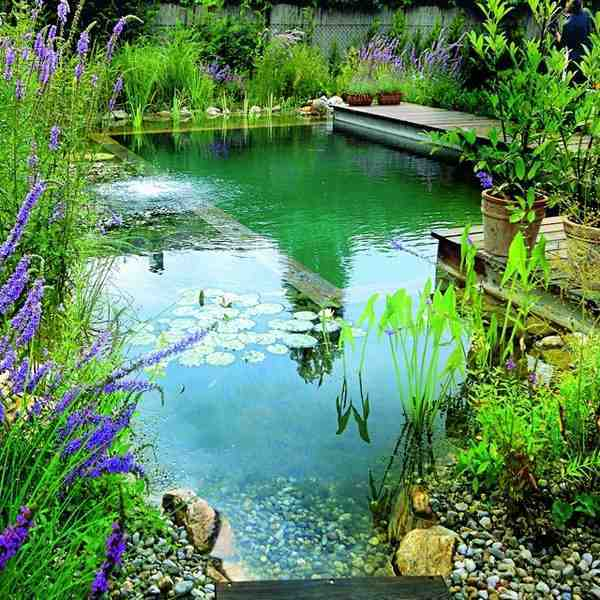 Things To Know About Natural Swimming Pool Definition Diy Pros And Cons