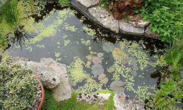pond blanket weeds