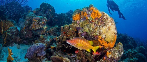 Bonaire diving