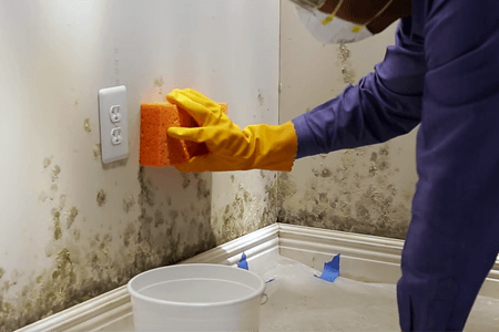 How To Remove Mold From Walls In Bathroom Complete Tips