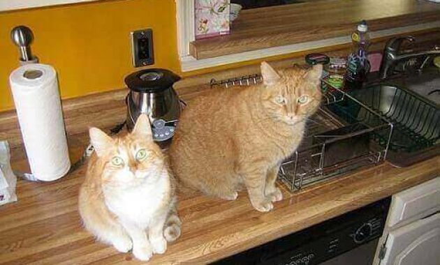 how to keep cats off from kitchen counter feature