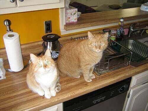 How Keep Cats Off Counters