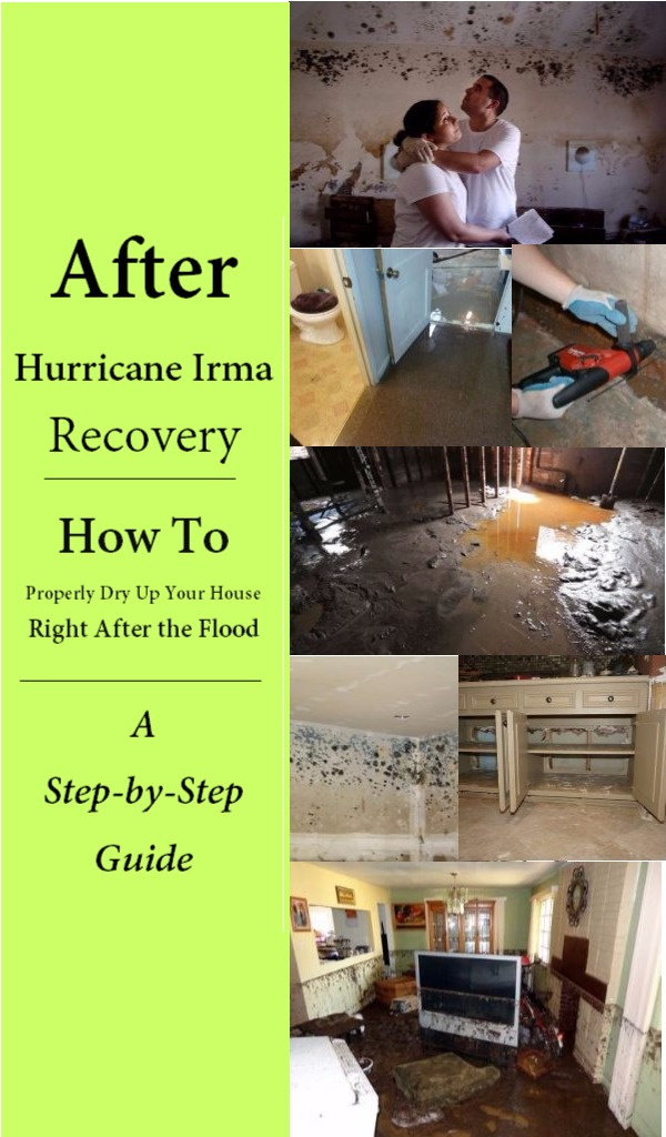 after hurricane irma recovery feature