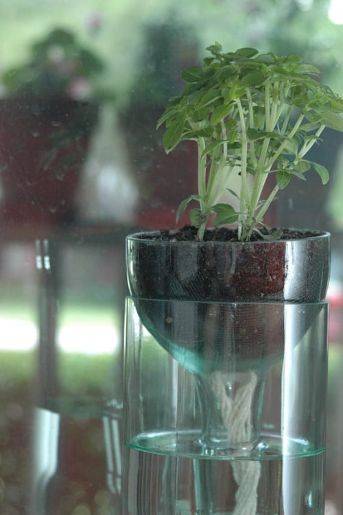 self watering planter 4-min