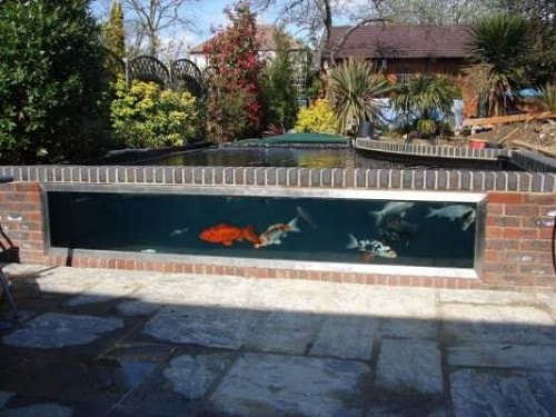 Above Ground Koi Pond with Window 14-min