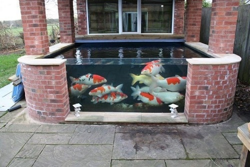 20 most clever above ground koi pond with window ideas for Koi pond window