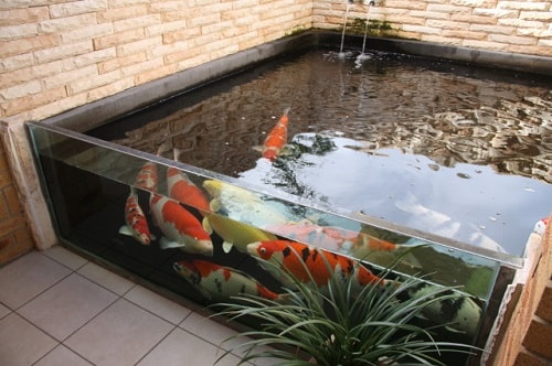 Above Ground Koi Pond with Window 6-min