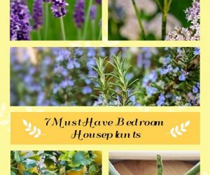Must-Have Bedroom Houseplants