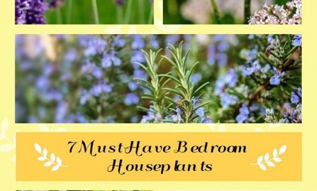 Must-Have Bedroom Houseplants