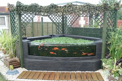 20 most clever above ground koi pond with window ideas for Koi pond shade ideas