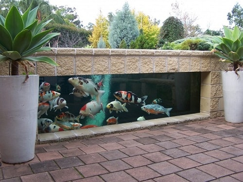 Above Ground Koi Pond with Window 26-min