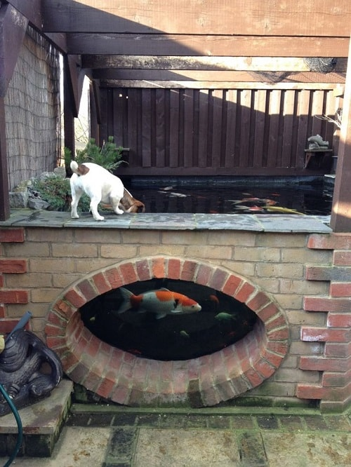 What S Wrong With My Garden Pond Water: 20+ Most Clever Above Ground Koi Pond With Window Ideas