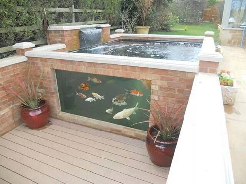 20 most clever above ground koi pond with window ideas for Concrete fish pond construction and design