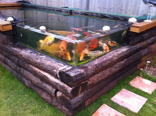 20 most clever above ground koi pond with window ideas for Wooden koi pond construction