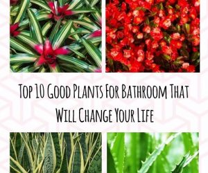 Good Plants For Bathroom (1)