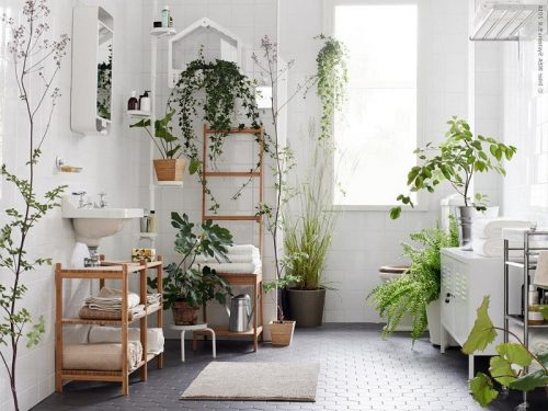 Good Plants For Bathroom 9-min-1