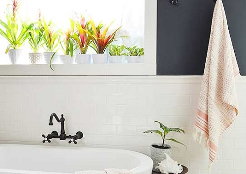 good plants for bathroom