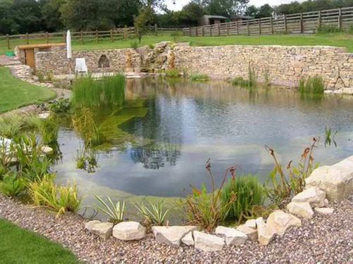natural swimming pool design 11-min