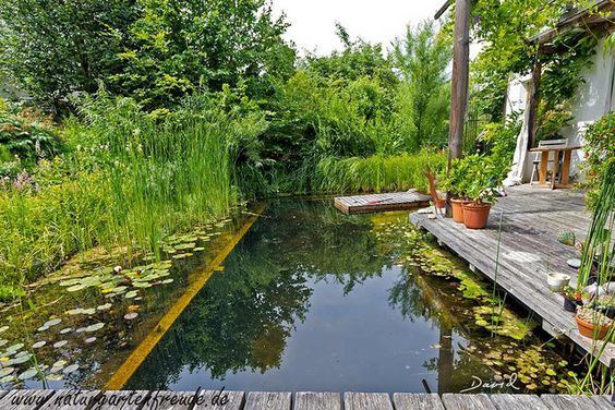 pond swimming pool 10