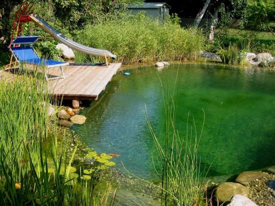 pond swimming pool 11