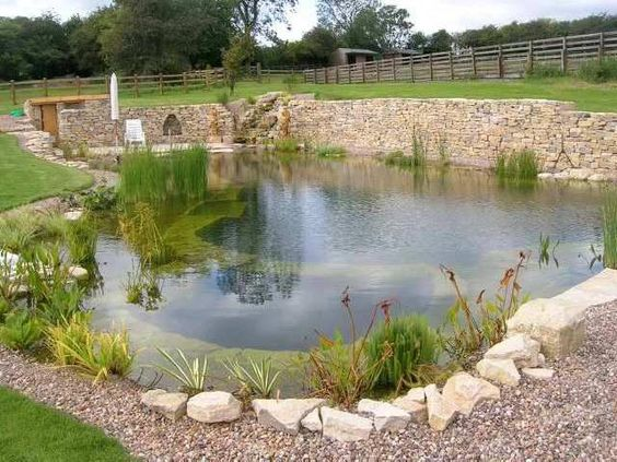 pond swimming pool 14