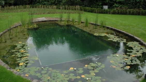pond swimming pool 2
