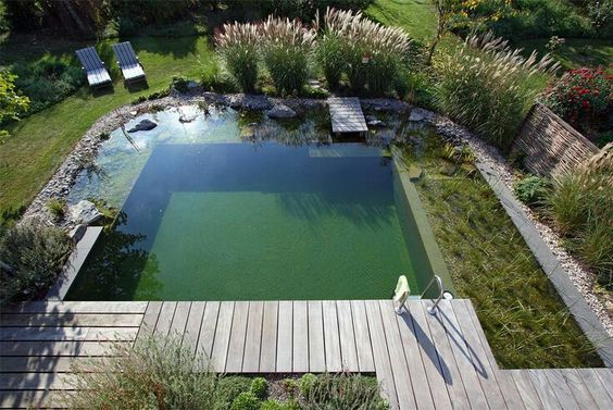 pond swimming pool 21