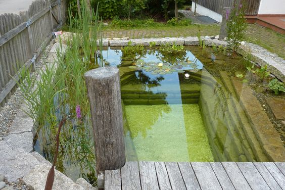 pond swimming pool 26