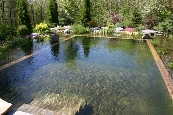 pond swimming pool 3