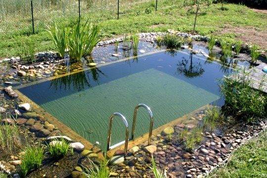 pond swimming pool 6