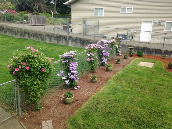 chainlink fence ideas 1