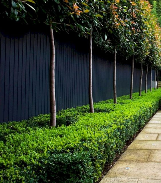 Vertical Backyard Ideas: Elegant Black Finish
