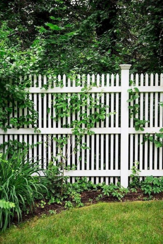 White Fence Ideas: Catchy Classic Design