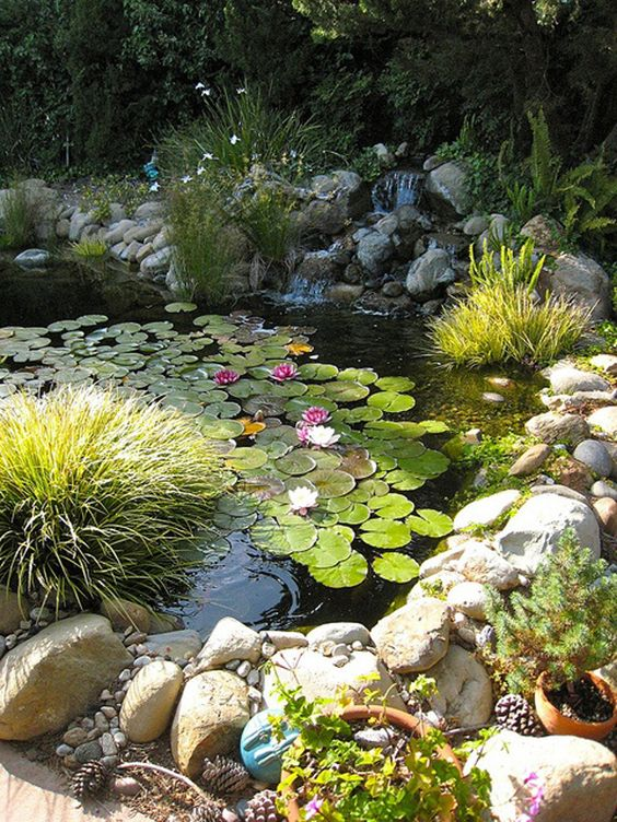 Backyard Water Feature: Natural Fish Pond