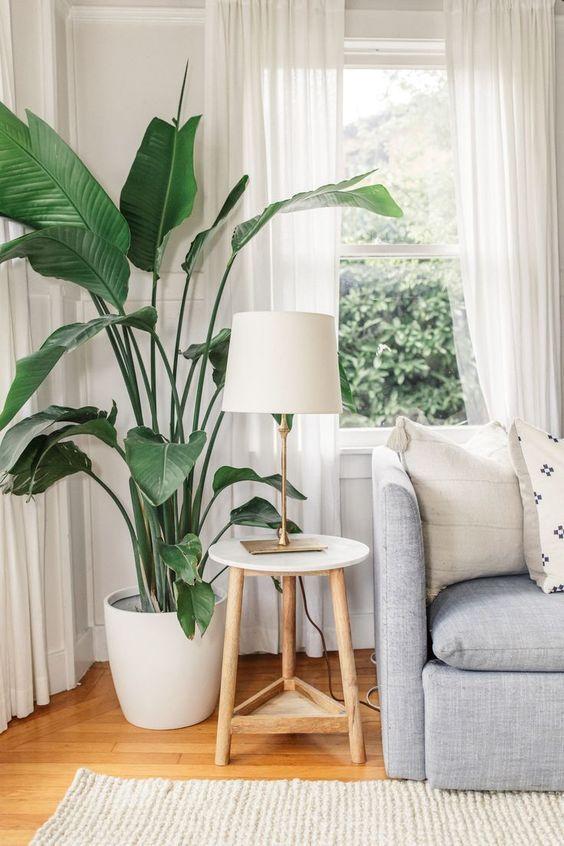Living Room Plants Ideas: Chic Tropical Decor