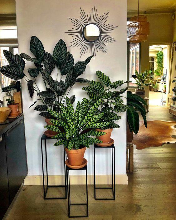 Living Room Plants Ideas 10