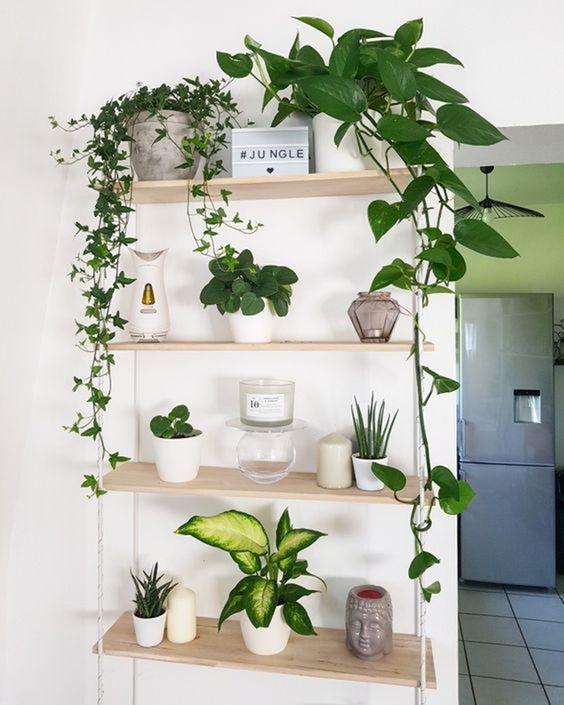 Living Room Plants Ideas 13