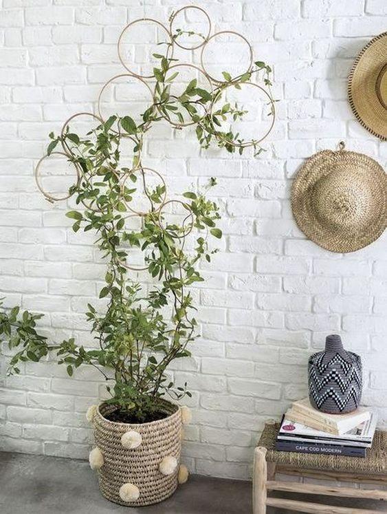 Living Room Plants Ideas 18