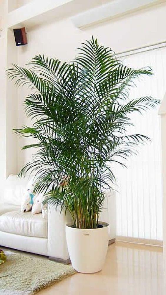 Living Room Plants Ideas 19