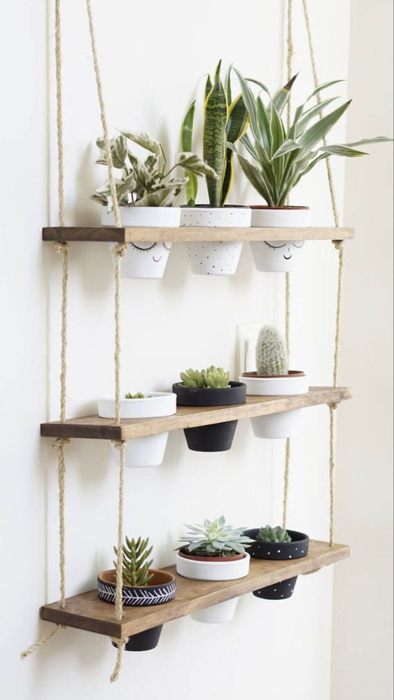 Living Room Plants Ideas: Stylish Minimalist Decor