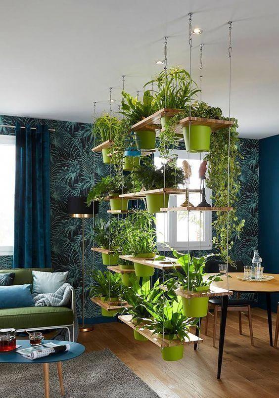 Living Room Plants Ideas: Striking Unique Decor