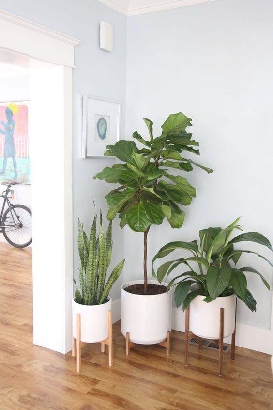Living Room Plants Ideas 9