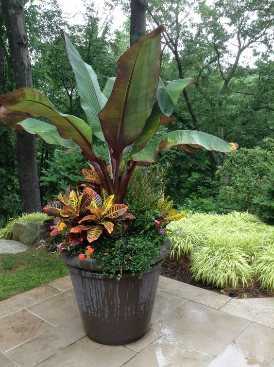 Patio Plants Ideas: Beautiful Tropical Touch