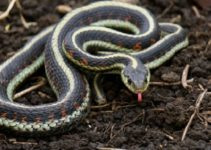 How to Get Rid of Garden Snakes feature