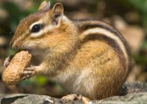 How to Keep Chipmunks Out of Garden feature