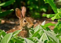 How to Keep Rabbits Out of Garden Home Remedies a feature