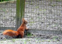9 Effective Ways on How to Keep Squirrels Out of Garden   DIY Project
