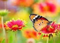 How to Make a Butterfly Garden feature