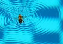 Find 6 Cheap DIY Ways on How to Keep Wasps Away from Pool