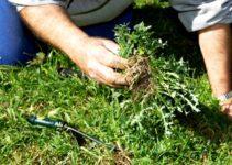 how to weed a garden feature